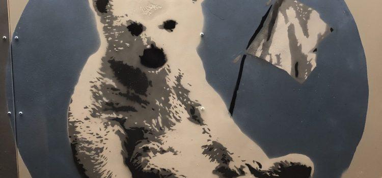 Coma Girl Isbjørn