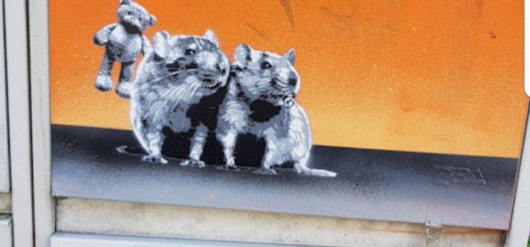 Rotter med bamse